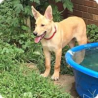 Adopt A Pet :: Truman (fostered in NC) - Cranston, RI