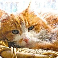 Adopt A Pet :: Monte - Davis, CA