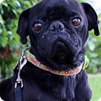 Adopt A Pet :: Jasper - Pismo Beach, CA