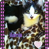 Adopt A Pet :: Ilana - Los Angeles, CA