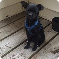 Adopt A Pet :: Bernard - Richmond, VA