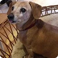 Adopt A Pet :: WEINER - Portland, OR