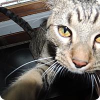 Adopt A Pet :: Rajah - Ortonville, MI