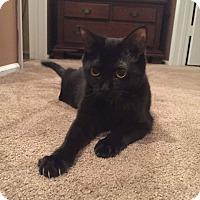 Adopt A Pet :: Annabelle - Jackson, NJ