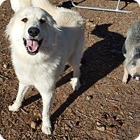 Adopt A Pet :: Elsa LGD - Kyle, TX