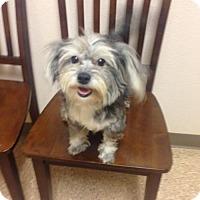 Adopt A Pet :: Nicky - Maricopa, AZ