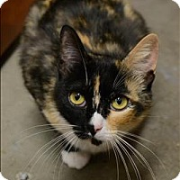 Adopt A Pet :: Patches - Sherwood, OR