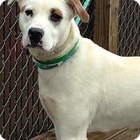 Adopt A Pet :: Audrey - Lebanon, ME