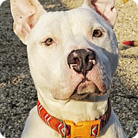 Adopt A Pet :: Kevin - West Babylon, NY