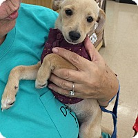 Adopt A Pet :: Princess - Schertz, TX