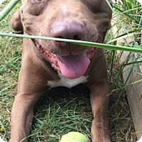 Adopt A Pet :: Matrix - Newland, NC