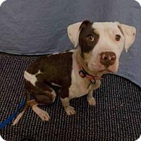 Adopt A Pet :: *STAR - Upper Marlboro, MD