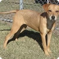 Adopt A Pet :: Winnie - Olive Branch, MS