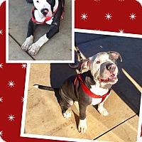 Adopt A Pet :: Loyal - Scottsdale, AZ