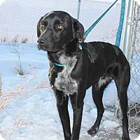 Adopt A Pet :: Gage - Ogden, UT