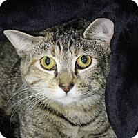 Adopt A Pet :: Lelani - Sarasota, FL