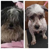 Adopt A Pet :: Charlie - Auburn, WA