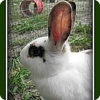 Adopt A Pet :: Nine - Williston, FL