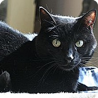 Adopt A Pet :: Salem - Columbia, MD