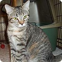 Adopt A Pet :: Jemma - Acme, PA