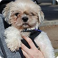 Adopt A Pet :: Little Lady - Sherman Oaks, CA