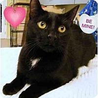 Adopt A Pet :: Sedona - Modesto, CA