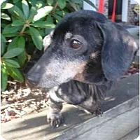 Adopt A Pet :: RIVER - Portland, OR