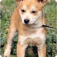 Adopt A Pet :: Annabell - Staunton, VA