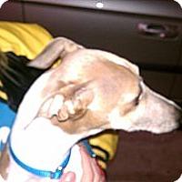 Adopt A Pet :: Jojo - Vidor, TX
