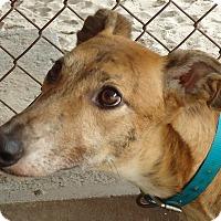 Adopt A Pet :: Ima Do It To It - Longwood, FL