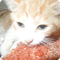 Adopt A Pet :: Jules - Medina, OH