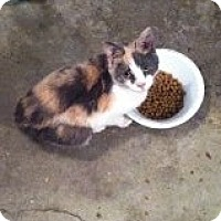Adopt A Pet :: Little Lucy - Delmont, PA