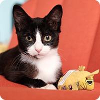 Adopt A Pet :: Kendra - Brooklyn, NY