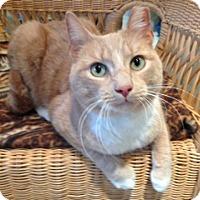 Adopt A Pet :: Harry - Staten Island, NY