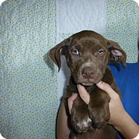 Adopt A Pet :: Mitzi - Oviedo, FL