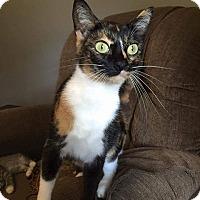 Adopt A Pet :: Ginny - Putnam, CT