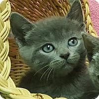 Adopt A Pet :: Haley - Colorado Springs, CO
