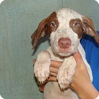 Adopt A Pet :: Texas - Oviedo, FL