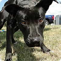 Adopt A Pet :: Harper Lee - Lewisville, IN