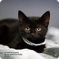 Adopt A Pet :: Marti - Brockton, MA