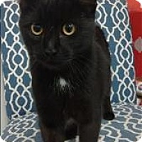 Adopt A Pet :: River @ Catfe - Vancouver, BC