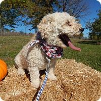 Adopt A Pet :: Scotch - Bucyrus, OH