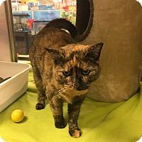 Adopt A Pet :: Mistletoe - Bensalem, PA