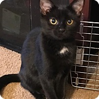 Adopt A Pet :: Dingle - Columbus, OH