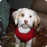 Adopt A Pet :: Jasper - Jennings, OK
