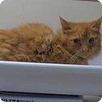 Adopt A Pet :: Ruben - Wildomar, CA