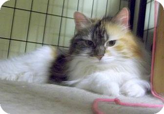 Cat Adoption Duluth Mn