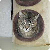 Adopt A Pet :: Gwendolyn - Colorado Springs, CO