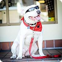 Adopt A Pet :: Kashi - Redondo Beach, CA