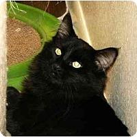 Adopt A Pet :: Bitti wags his tail! - Scottsdale, AZ